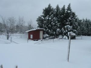 Snowy Landscape scene like Tennessee Christmas