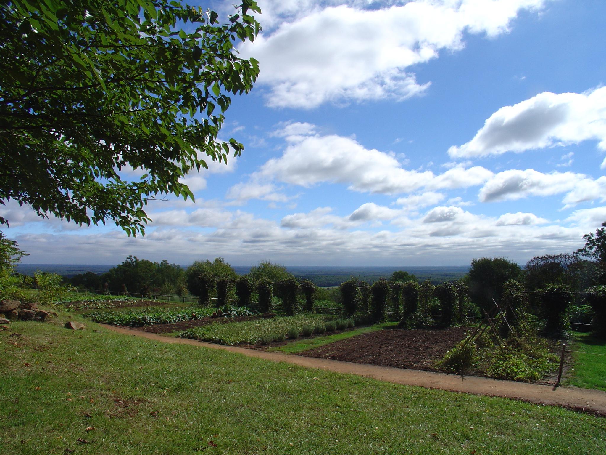 Monticello Historic Seeds Sampler- Grow five different ...  |Thomas Jefferson Garden Seeds