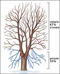 Tree Pruning – 6/2/12