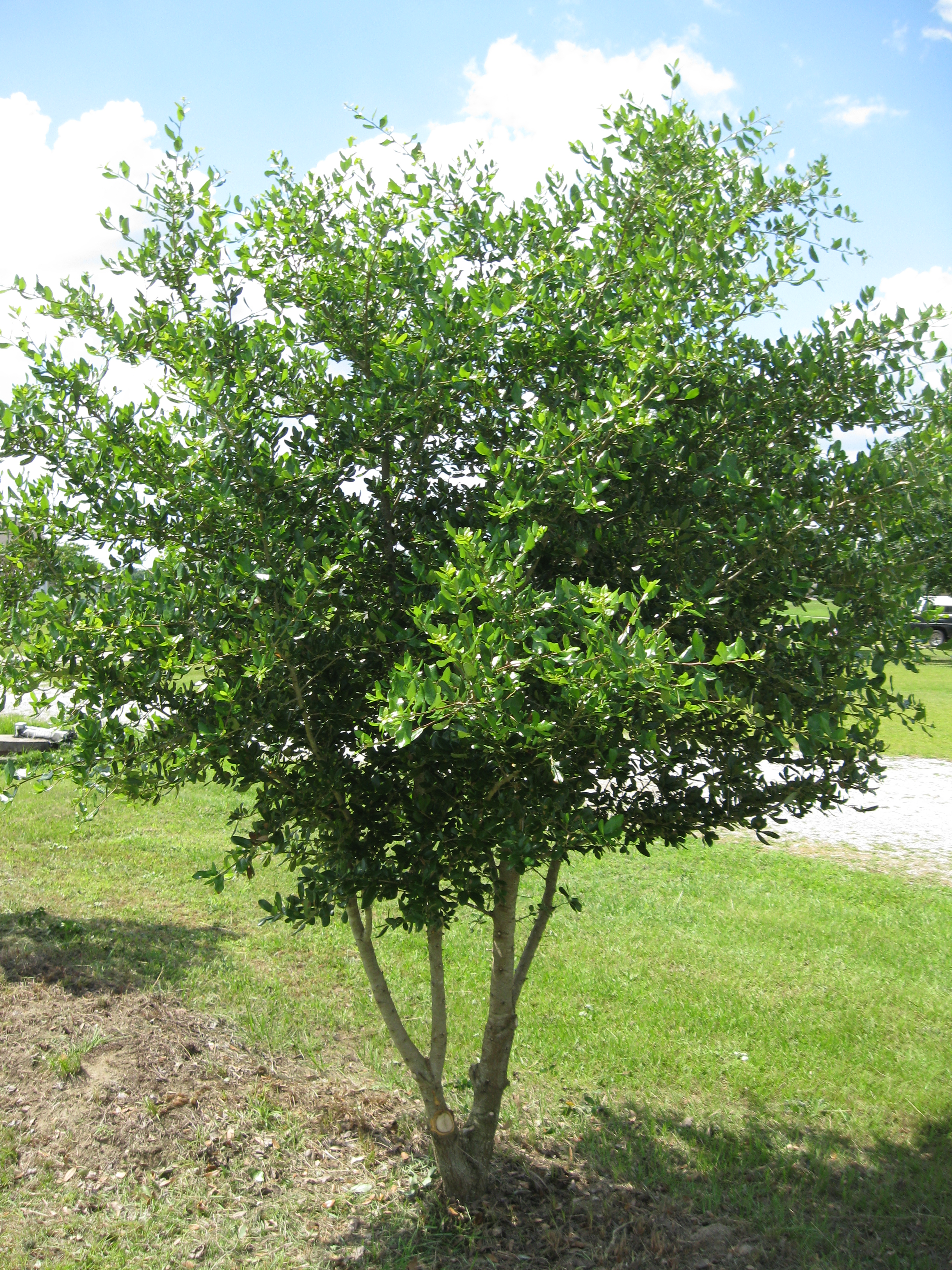 State tree pruning posted