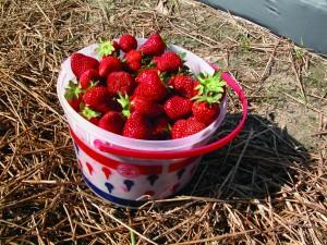 StrawberryBucket