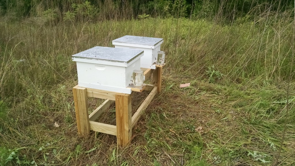 picture of two langstroth hives